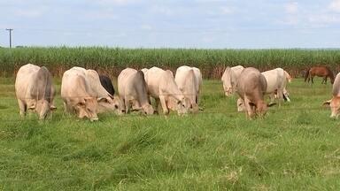 Furtos de gado preocupam pecuaristas do Centro-Oeste de SP - Casos têm sido frequentes na região.