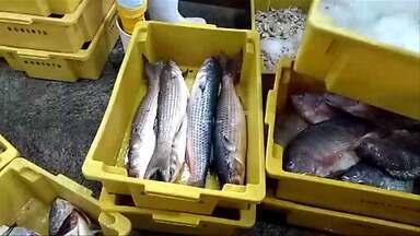 Polícia apreende cerca de 300 quilos de pescado em Taubaté - Produtos comercializados em peixarias no Mercadão de Taubaté estavam sem nota fiscal para comprovação da origem e, no caso dos camarões, foram capturados fora de época.