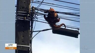 Tamanduá mirim é resgatado de fiação em poste de avenida - Tamanduá mirim é resgatado de fiação em poste de avenida