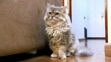 Dona de gata ganha na Justiça direito de manter animal em condomínio - Apesar da proibição na convenção do condomínio, STJ decide que animal pode continuar no local.