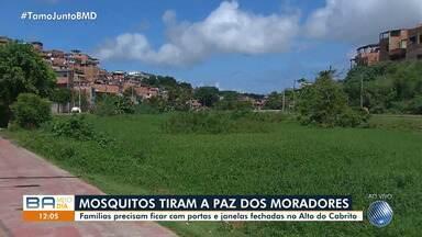 Moradores reclamam da grande quantidade de mosquitos no Alto do Cabrito, em Salvador - As famílias precisam ficar com as portas e janelas fechadas por conta dos pernilongos.