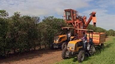 Safra de café será menor na região de Marília - Produtividade caiu com clima e bienalidade da planta.