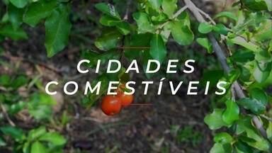 Cidades comestíveis e os alimentos acessíveis no espaço urbano
