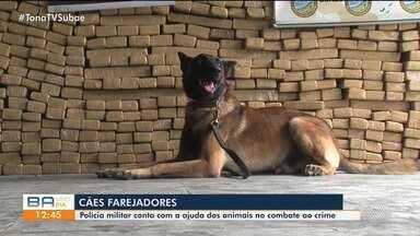 Conheça os cães farejadores que ajudam a combater crimes na região de Feira de Santana - Os animais ajudam principalmente na detecção de drogas e armas de fogo.