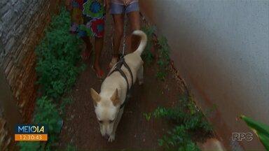 Projeto na Câmara de Maringá libera animais de estimação em hospitais - Proposta chegou a ser incluída na pauta desta quinta-feira (6), mas foi retirada por duas sessões.