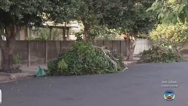 Prefeitura de Pereira Barreto realiza 'faxinão' para deixar a cidade mais limpa - Começa nesta segunda-feira (10) um faxinão para deixar a cidade de Pereira Barreto mais limpa. É uma iniciativa da prefeitura para retirar lixo de casas, comércio e terrenos baldios.