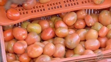 Alta no preço do tomate anima produtores de MS - Produtores tem pensado até em ampliar a produção.