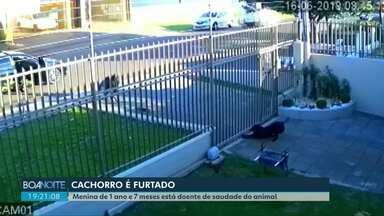 Filhote de cachorro é furtado em Cascavel - Família espera que o animal seja devolvido, já que a filha de apenas um ano e sete meses está doente de saudade.
