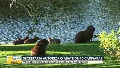Secretaria autoriza o abate de 40 capivaras - Morte por febre maculosa motivou a decisão, que divide opiniões.