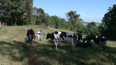 Até 2025 a região sul do país vai produzir mais da metade do leite nacional - Especialistas do setor orientam como o pequeno produtor pode competir neste mercado cada vez mais exigente
