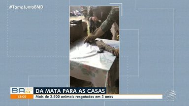 Guarda Municipal de Salvador suspende trabalho de resgate de animais - A justificativa para a interrupção do serviço é que a segurança pública tem exigido mais atenção dos agentes.