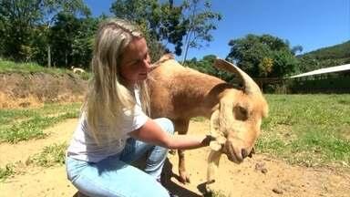 Veterinária abriga em santuário animais de grande porte que sofreram maus-tratos - Patrícia recebe no local os bichinhos trabalhadores que não tiveram direito a uma vida feliz e segura.