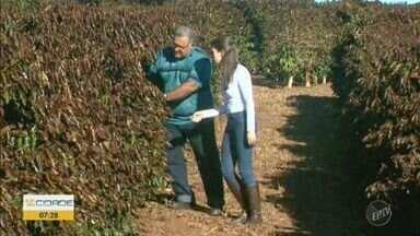 Frio intenso causa prejuízos na plantação de café da região da Alta Mogiana - A temperatura na madrugada de domingo chegou a 1ºC. Produção de cafés especiais pode ter redução e, com isso, preços podem subir.