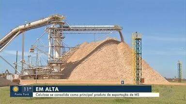 Celulose se consolida como principal produto de exportação de MS - Desde 2006, a soja sempre terminou o primeiro semestre do ano como principal produto exportado por Mato Grosso do Sul. Em 2019, após 13 anos de hegemonia da oleaginosa, o cenário mudou.