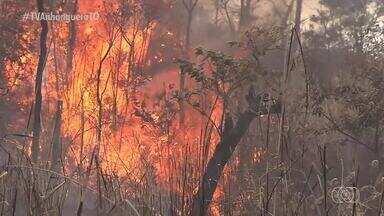 Brigadistas intensificam treinamentos para lidar com as queimadas registradas no TO - Brigadistas intensificam treinamentos para lidar com as queimadas registradas no TO