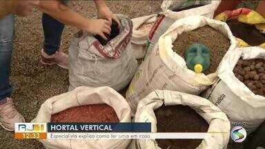Horta vertical: especialista explica como ter uma em casa - Saiba quais cuidados devem ser tomados para ter a sua.