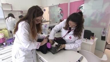 Veterinária fatura com clínica com atendimento especial para gatos - A clínica tem recepção, consultório e som ambiente só para gatos.
