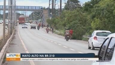 Matagal ocupa margens da BR-210 e traz perigo aos pedestres - Matagal ocupa margens da BR-210 e traz perigo aos pedestres.