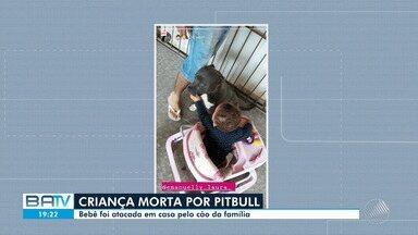 Criança de um ano e três meses morre depois de ser atacada por pitbull no norte da Bahia - Tragédia aconteceu na cidade de Senhor do Bonfim, na manhã de sexta-feira (19).