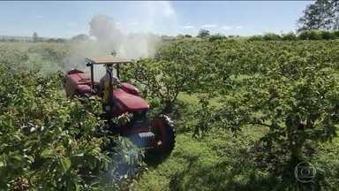 Governo aprova registro de mais 51 agrotóxicos, totalizando 262 no ano - Entre os produtos liberados para agricultores está o principio ativo sulfoxaflor, que está em estudos no exterior e é relacionado à redução de enxames de abelhas. Ministério promete regras para o uso do defensivo.