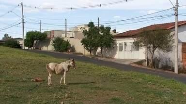 Animais são flagrados soltos em ruas e avenidas de Rio Preto - Animais são flagrados soltos em ruas e avenidas de Rio Preto