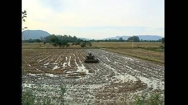 Arroz tem o maior preço dos últimos dez anos e enfrenta crises na produção - A safra deste ano teve queda de 14,5% na produção em relação a safra do ano passado no estado.
