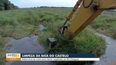 Trabalho de limpeza na baía do Castelo deve demorar uma semana - Todos os custos estão sendo divididos pelos moradores da região.