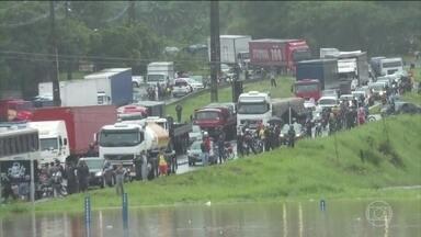 Chuvas na Grande Recife deixam 11 mortos e causam alagamentos e quedas de barreiras - Jacaré foi encontrado por moradores do bairro do Prado, na Zona Oeste da cidade.