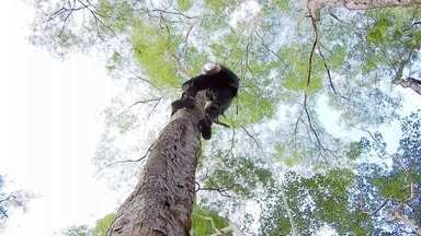 Pesquisadores de Viçosa desenvolvem técnica que acelera recuperação de vegetação nativa - Pesquisadores da Universidade Federal de Viçosa, em Minas Gerais, usam técnicas que aceleram a restauração de áreas degradadas, recuperando a vegetação nativa. A reportagem é da TV Integração, nossa parceira em Juiz de Fora.