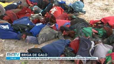Polícia prende cerca de cento e cinquenta pessoas que participavam de 'rinha de galo' - O fato conteceu no município de Luís Eduardo Magalhães, sudoeste do estado.