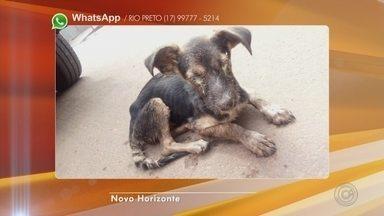 Bombeiros resgatam cadela em bueiro com mais de dois metros de profundidade - Os bombeiros de Novo Horizonte (SP) resgataram uma cadela que caiu em um bueiro com mais de dois metros de profundidade. O animal foi levado para um hospital veterinário para realizar alguns exames.