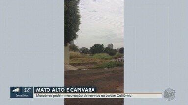 Prefeitura limpa terrenos no Jardim Califórnia em Ribeirão Preto - Moradores cobravam roçada do mato na Avenida Coronel Fernando Ferreira Leite.
