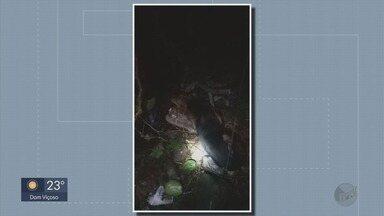 Cachorro cai no esgoto e é resgatado pelos bombeiros em Poços de Caldas - Cachorro cai no esgoto e é resgatado pelos bombeiros em Poços de Caldas