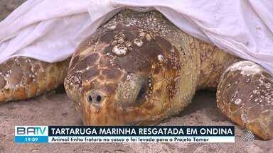 Tartaruga marinha é resgatada na praia de Ondina, em Salvador - Animal foi localizado com fratura no casco e foi levado pra o Projeto Tamar.