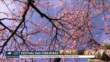 Começa o Festival das Cerejeiras no parque do Carmo, na zona Leste - Festival vai até domingo.