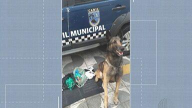 GCM prende suspeitos de tráfico em Suzano - Com ajuda de um cão, GCM encontrou diversos tipos de drogas escondidos em uma lixeira.