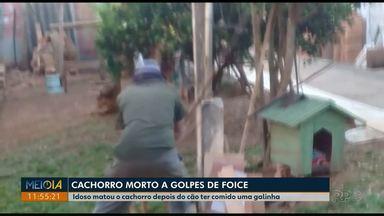 Idoso é preso suspeito de matar cachorro com golpes de foice em Ponta Grossa - Ele relatou para a polícia que matou o cão porque ele tinha comido galinha dele.