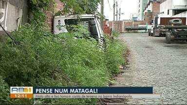 Moradores do Indianópolis reclamam de mato alto no bairro, em Caruaru - Problema foi registrado em frente ao Parque Severino Montenegro.