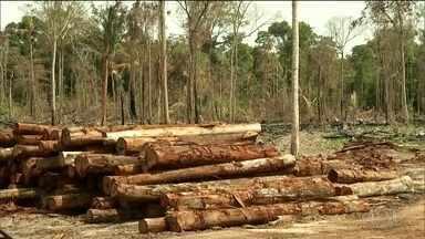 Noruega suspende repasses para o Fundo Amazônia - O Brasil perde a ajuda de mais um país na preservação da Amazônia. Na última década, a Noruega repassou mais de R$ 3 bilhões para o fundo.