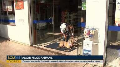 Comerciantes dão exemplo de cuidados aos cachorros - Eles cuidam e dão comida para cachorros que estão nas ruas.