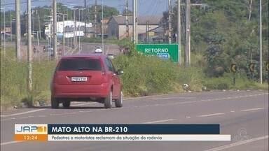 Pedestres e motoristas reclamam de mato alto em trechos da rodovia BR-210 - Pedestres e motoristas reclamam de mato alto em trechos da rodovia BR-210