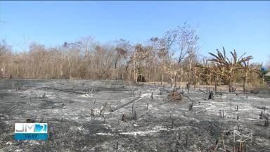 Queimada destrói grande área no cerrado maranhense - Em Balsas, a área destruída pelo fogo era equivalente a 300 campos de futebol.