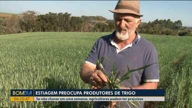 Estiagem preocupa produtores de trigo do Sudoeste - Se não chover em uma semana, agricultores podem ter prejuízos.