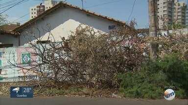 Restos de podas de árvores encobrem calçada em Ribeirão Preto - Moradores cobram recolhimento de galhos na Rua Platina.