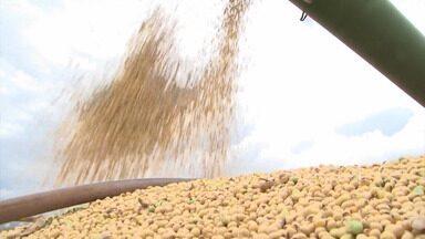 Bahia Rural 20 anos: relembre o crescimento da produção de grãos no oeste baiano - Região abastece os mercados nacional e internacional com milho, algodão, soja.