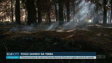 Moradores ficam assustados com incêndio subterrâneo, em Santa Maria do Oeste - Especialista explica o fenômeno que está destruindo área de reflorestamento.