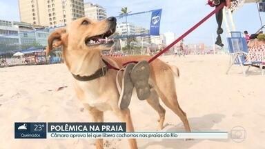 Lei que libera cachorros nas praias do Rio divide opiniões - A Câmara de Vereadores do Rio aprovou uma lei que libera cachorros nas praias da cidade. A medida ainda precisa da aprovação da prefeitura.