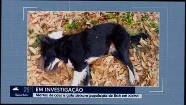Após morte de morte de animais, Polícia Civil encontra veneno na casa de suspeito em Ibiá - Cães e um gato apareceram mortos em vários pontos da cidade e pelo menos 13 morreram.