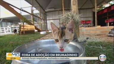 Vale faz feira de adoção de animais resgatados em Brumadinho após rompimento da barragem - Cães e gatos foram castrados. Evento será neste sábado (31).