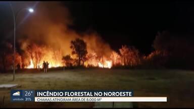 Bombeiros controlam incêndio florestal no Noroeste - As chamas atingiram uma área de 8.000 m².